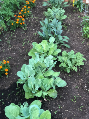Leafy greens and kale